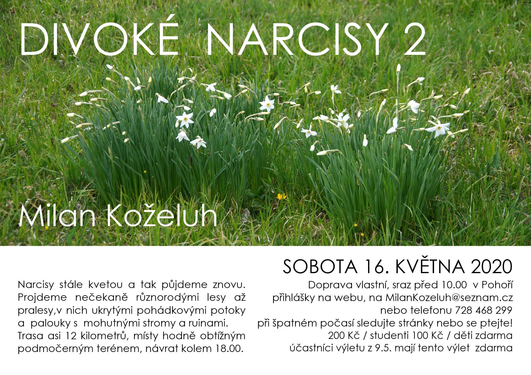 NAŠE Divoké narcisy 2 web